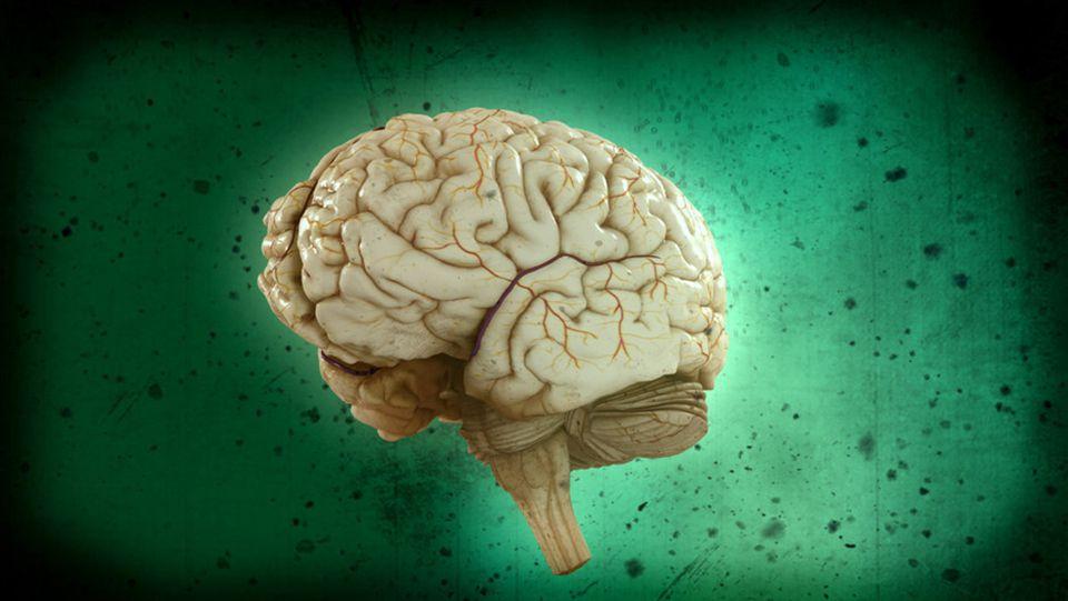 En hjerne i egen sovs